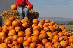 Pumpkin Mountain