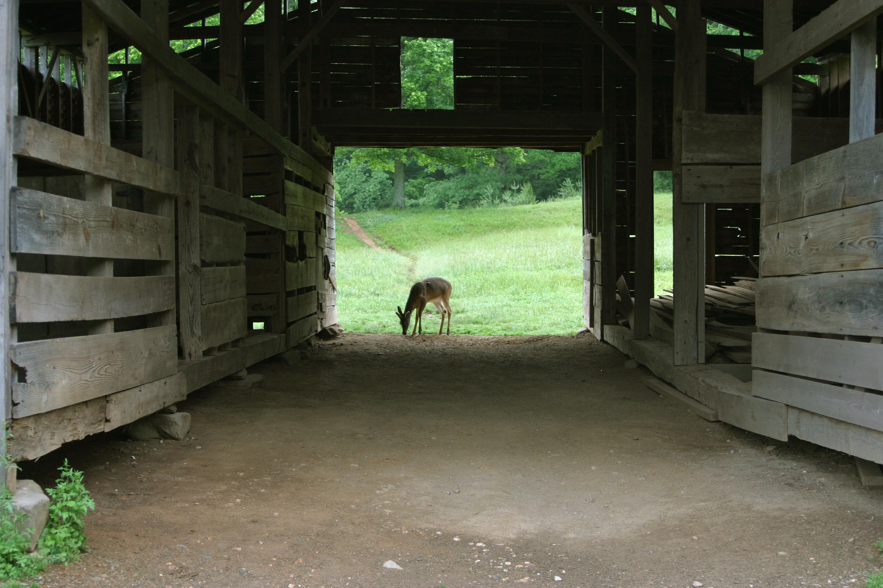 Deer Grazing in Barn