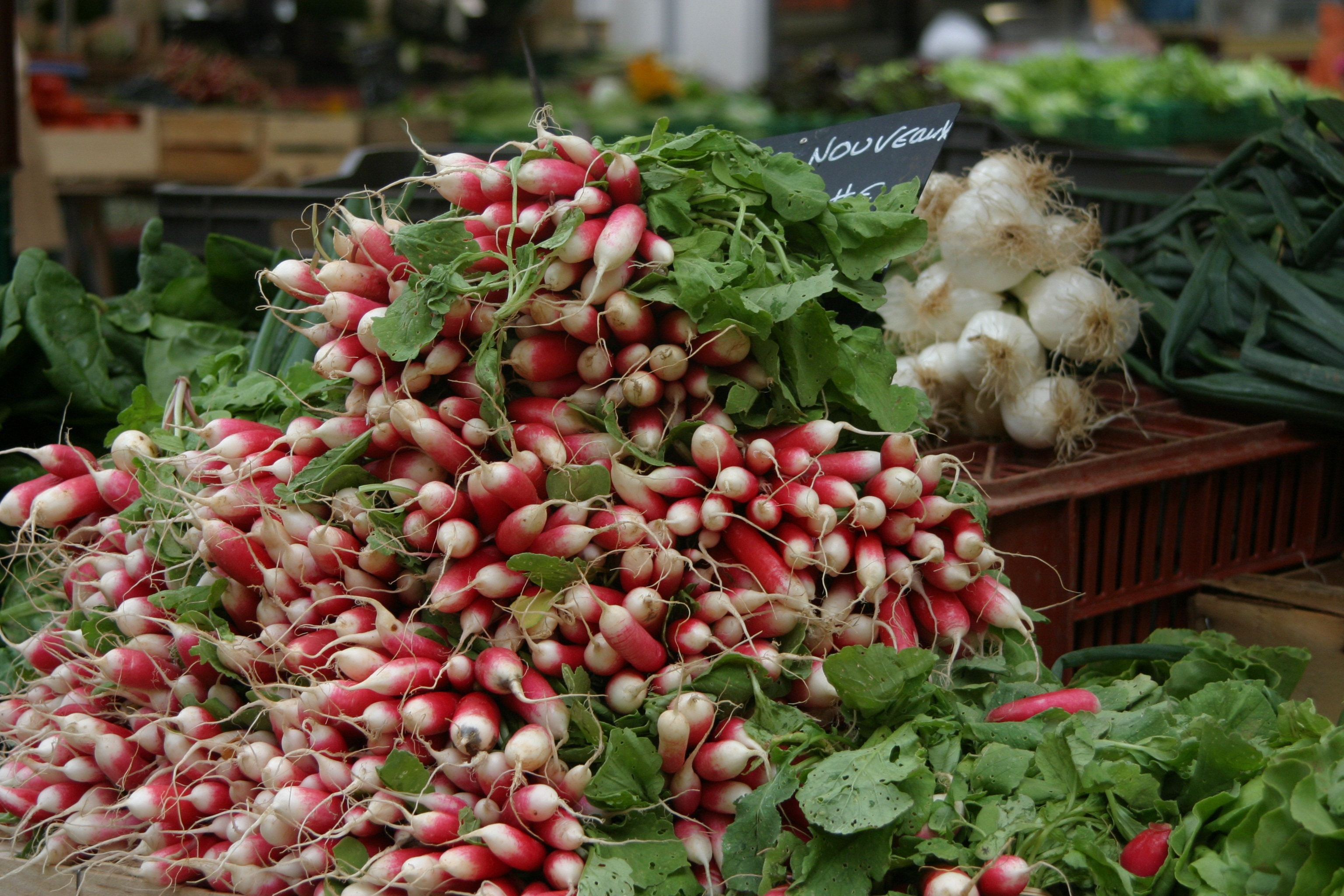 Radishes by the bunch