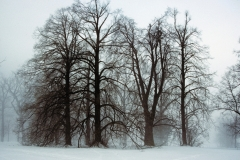 Foggy Trees at Mendon Ponds