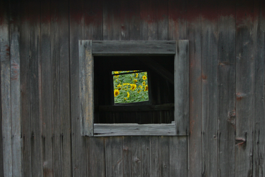 Through the barn window