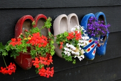 Wooden shoes and flowers