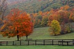 Pastoral fall scene
