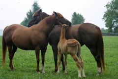 Foal with mother