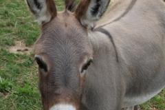 Mama donkey