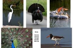 Bird Enthusiasts!