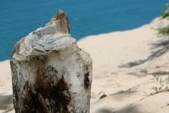 Mottled tree stump